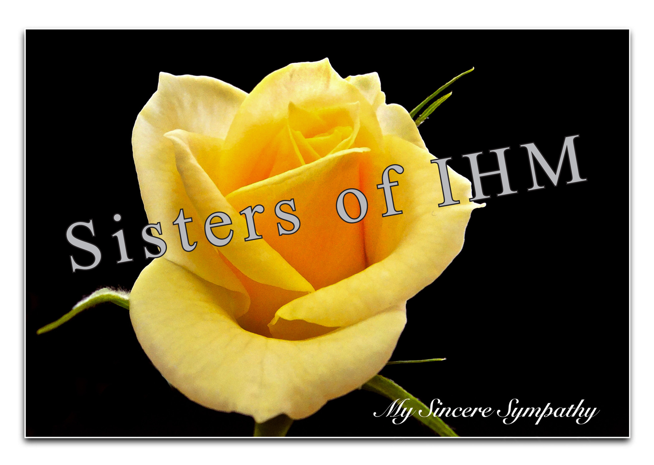 Sympathy Yellow Rose Copyright